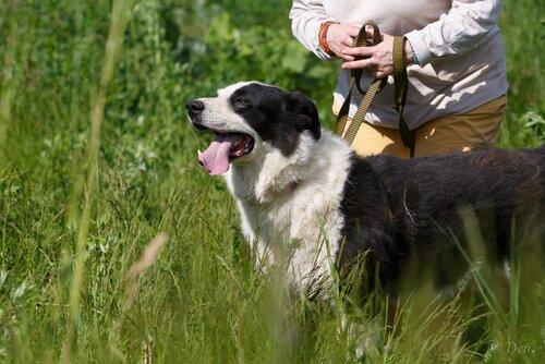 Брюс, собака из приюта догпорта