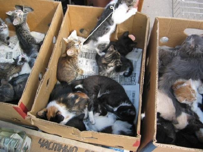 Конвейер смерти, или Смерть в коробке. Жуткая правда о бездушном бизнесе тётушек с котятами. (13 фото)