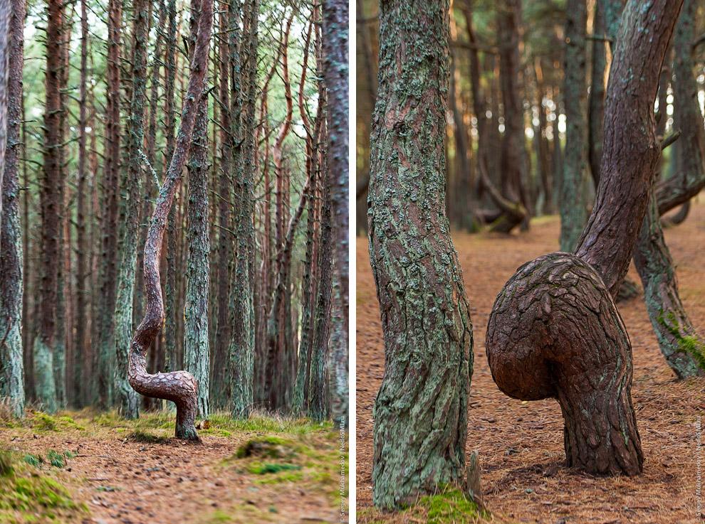 Несмотря на явную ненормальность деревьев, туристы считают полезным для своего здоровья и удачи