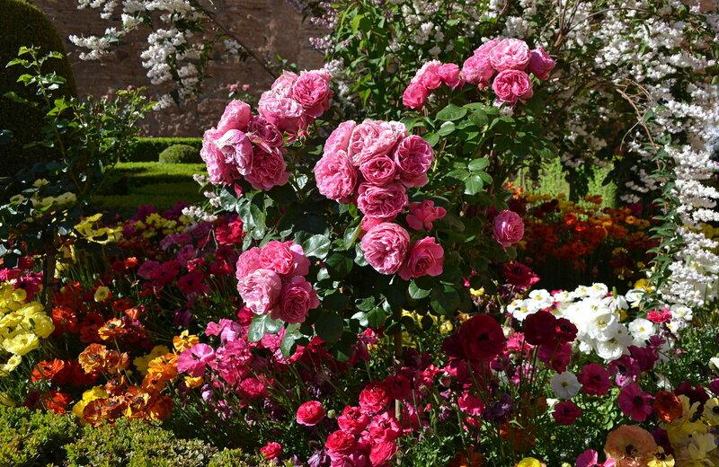 Роскошь цветения