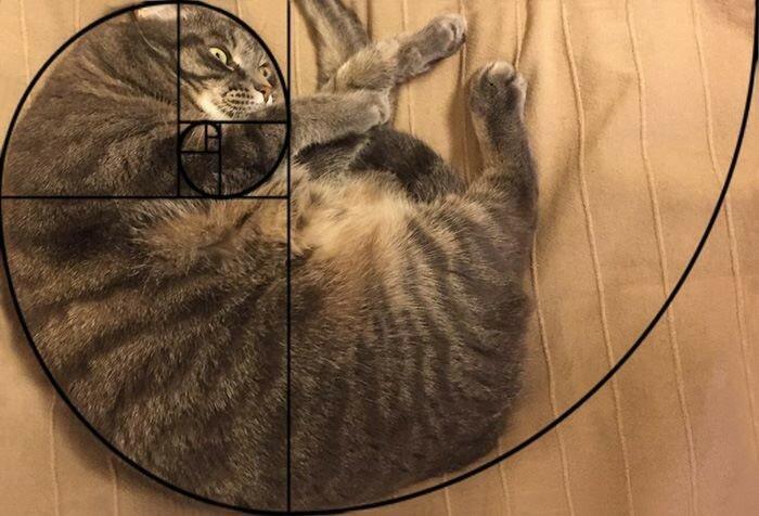спираль Фибоначчи.jpg