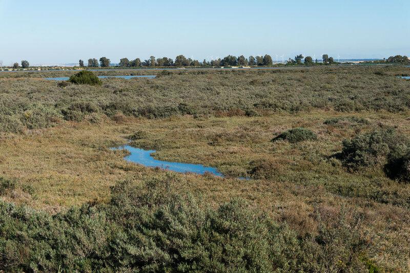 болота в кадисской бухте