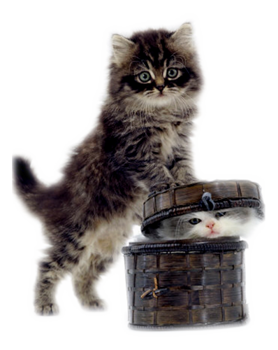 кошки-кошки.png
