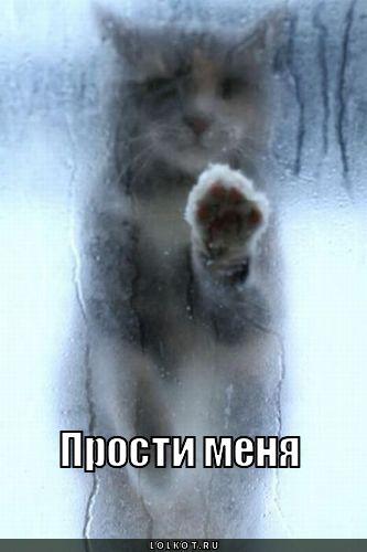 Прости меня! Киса за запотевшим окном