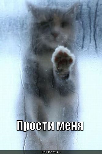 Прости меня! Киса за запотевшим окном открытки фото рисунки картинки поздравления