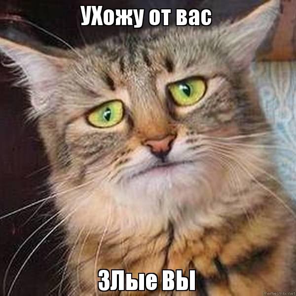 Ухожу от вас! Злые вы! Кот открытки фото рисунки картинки поздравления