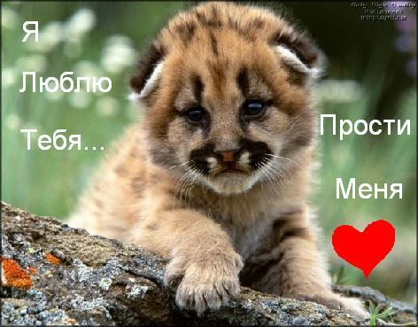 Я люблю тебя! Прости меня!