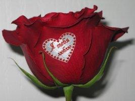 Я тебя люблю! В сердечке на розе надпись.JPG