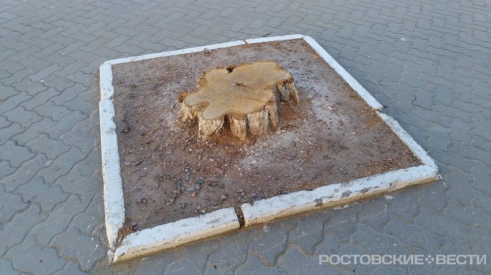 Ростовская прокуратура спасла от вырубки сотни деревьев