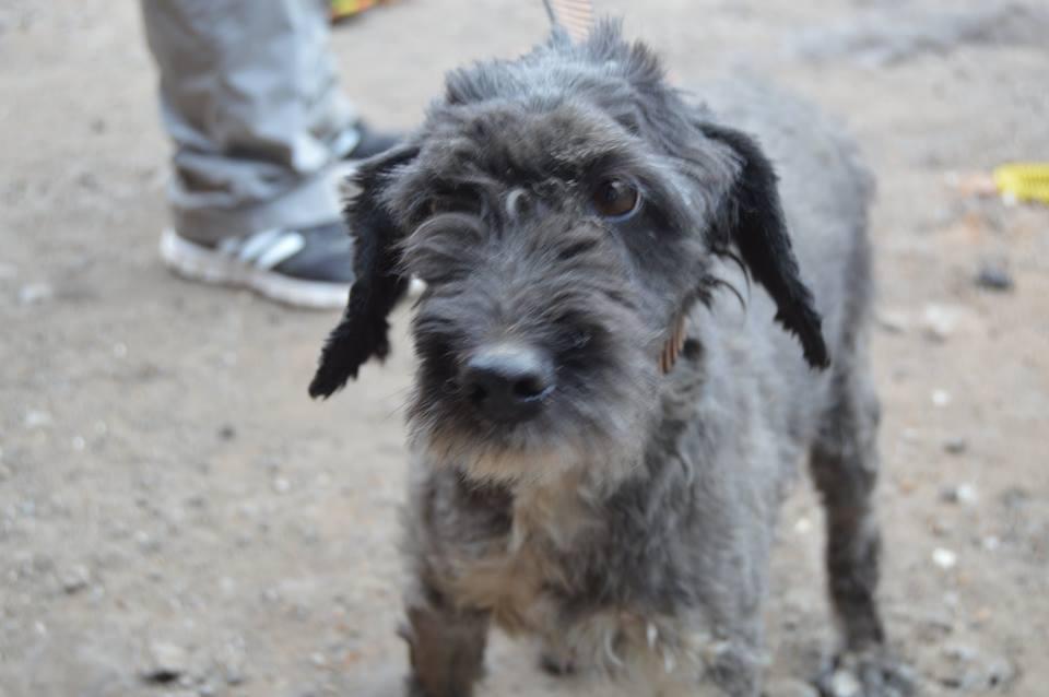 Кристофер собака из приюта догпорта