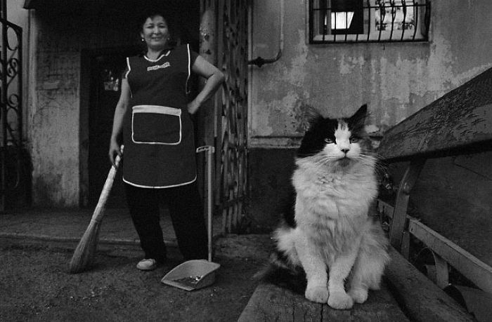 Тайный мир бездомных кошек Казахстана в талантливых фотографиях Евгении Гор