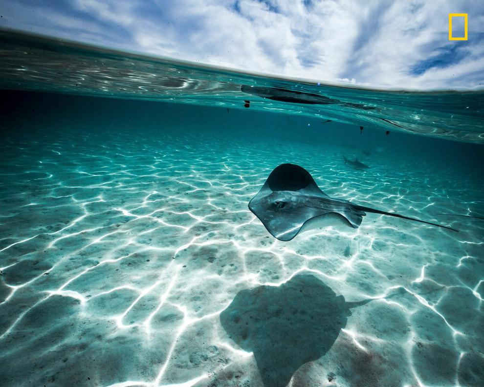 5. Высыхающий водоем. (Фото Abbas Rastegar | National Geographic Your Shot):