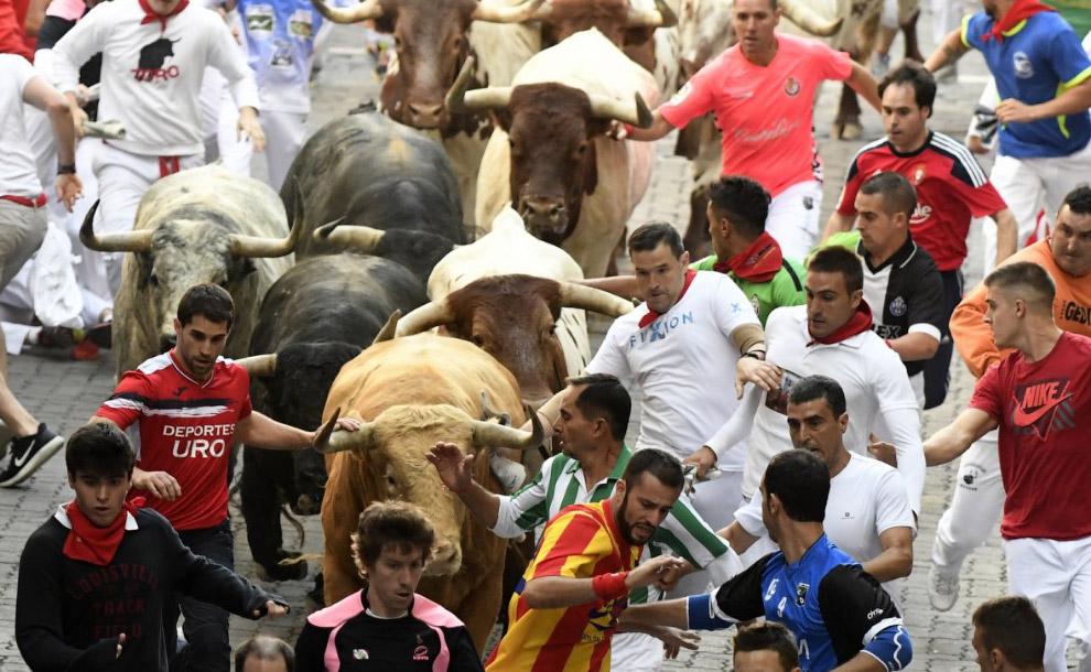 14. В бегах участвуют быки весом примерно в 3,5 тонны с острыми как ножи рогами. Средний возрас