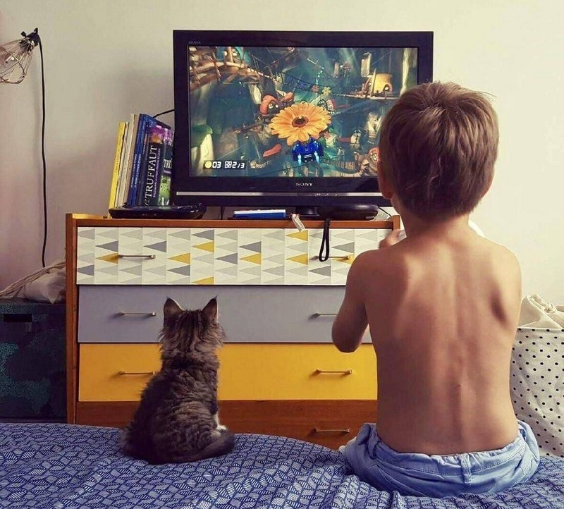 Забавные и симпатичные котики (22 фото)
