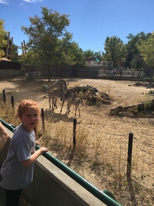 «Отвела 6-летнюю дочь посмотреть на жеребенка зебры. Кажется, теперь она еще и знает, откуда они бер