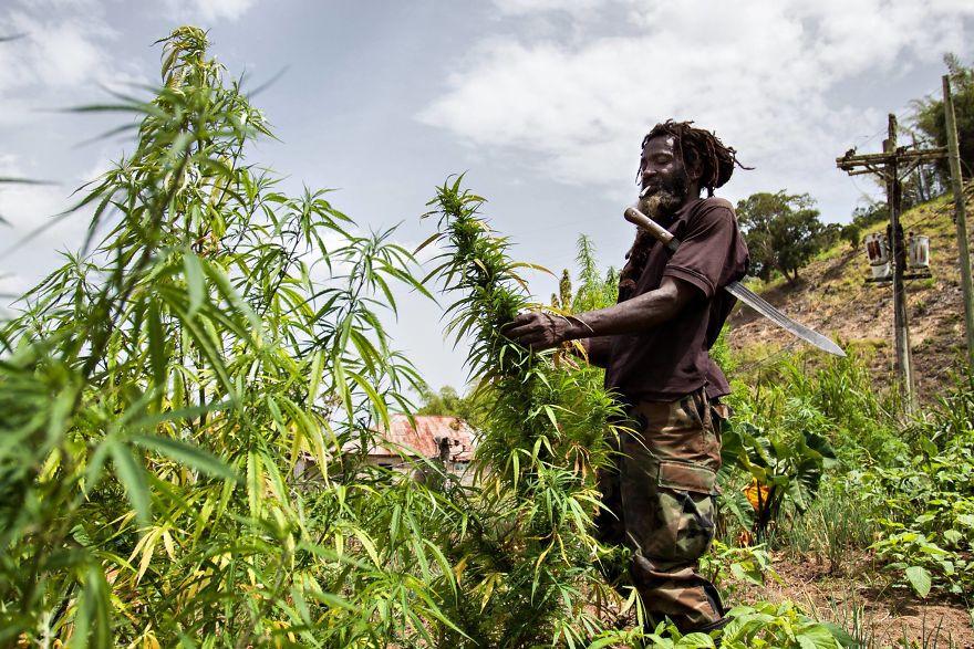 Культура растафарианства и регги, Ямайка.