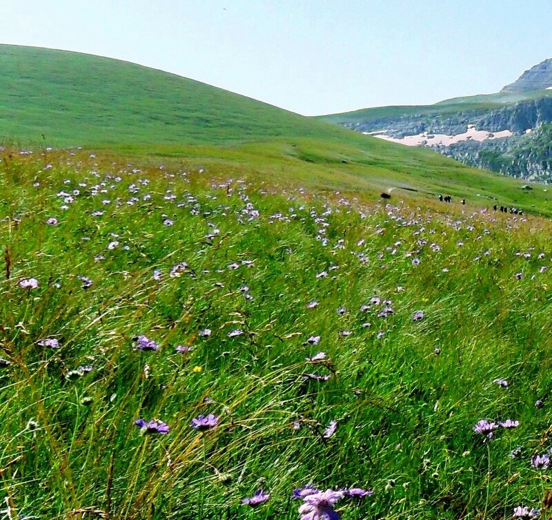 В походе на Оштен, июль, в горах...  (10).JPG