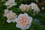 Розы цветут - Страница 2 0_20e3bc_324ccd3d_S