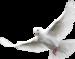 White_Dove.png
