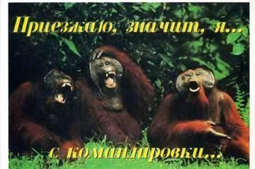 https://img-fotki.yandex.ru/get/228104/118912681.150/0_324258_57a5a1d6_orig.jpg