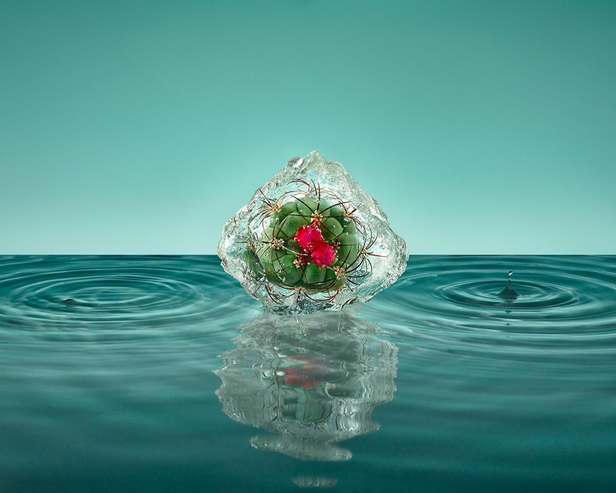 Замораживание цветов Паломы Ринкон