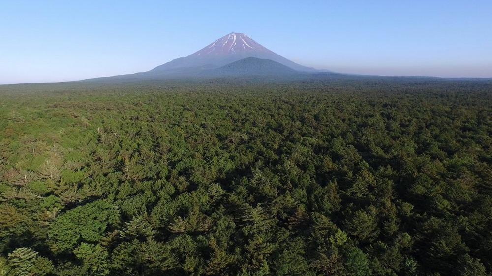 Aokigahara-and-Mount-Fuji1-1024x576_resize.jpg