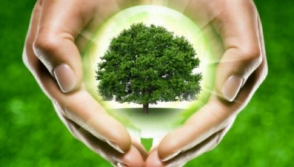 Всероссийский день посадки леса. Работаем вместе