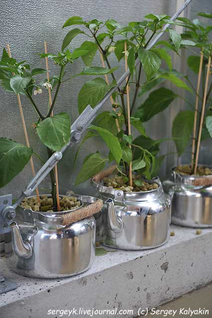 Inspirational Garden 2 (5).JPG