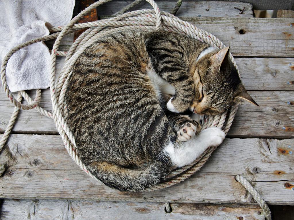 10. Если вы больны, кошка не лезет с лекарствами, а просто спит рядом.