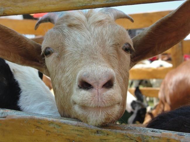 © Pixabay  Однажды вовремя работы австралийский фермер Ноэль Осборн (Noel Osborne) упал вкуч