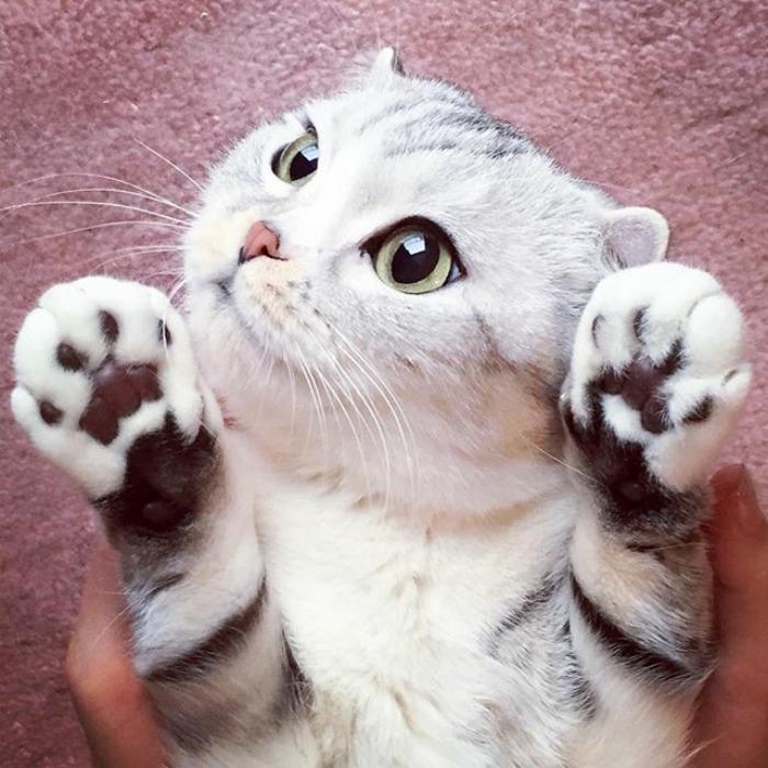 Фото обворожительной кошки с огромными глазами