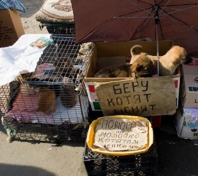 Особо жестокие экземпляры расправляются с котиками и собачками прямо в конце дня, просто-напросто св