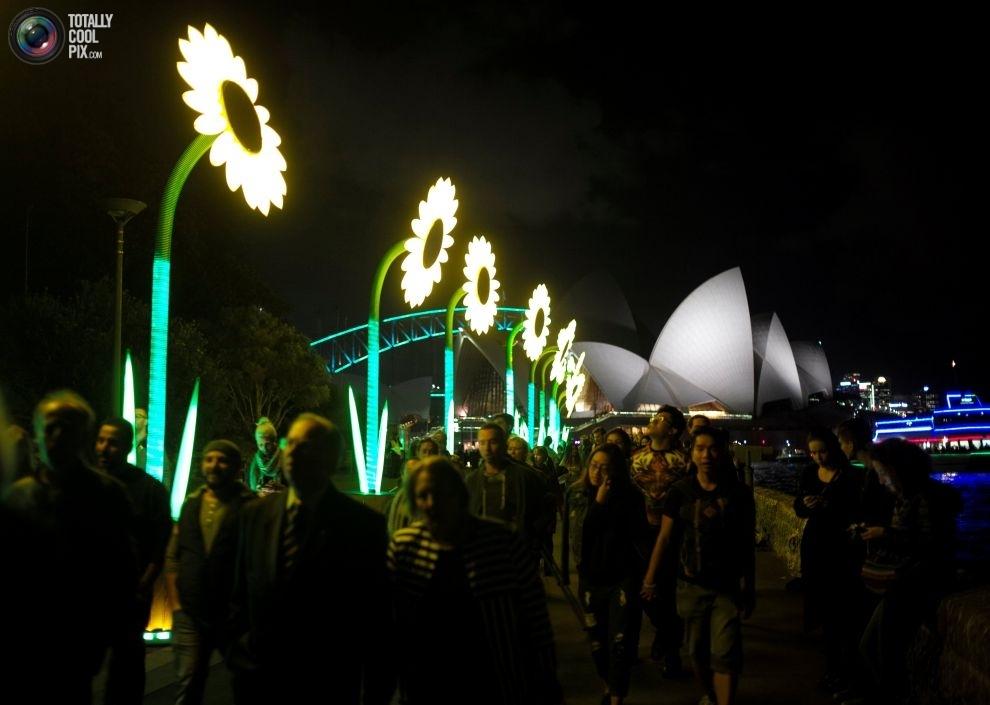 Инсталляции в виде подсолнухов на набережной возле Сиднейского оперного театра в день открытия фести
