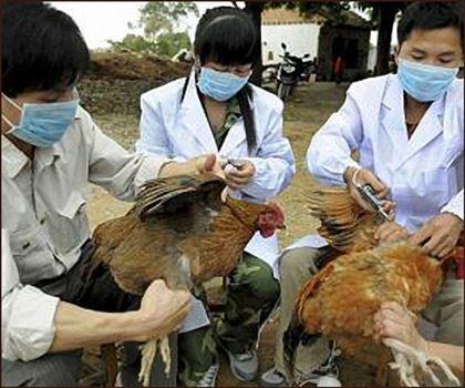 Ученые узнали, что птичий грипп можно подхватить откошек