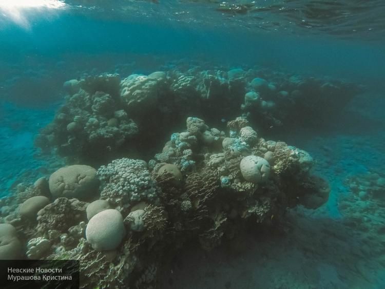 Ученые назвали животное-рекордсмена поочистке воды