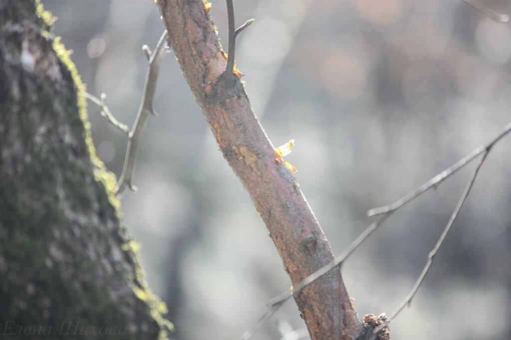 В лесу-8.jpg