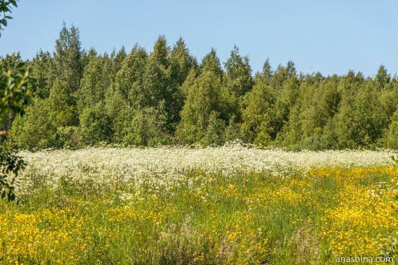 Придорожные цветы, Вологодская область