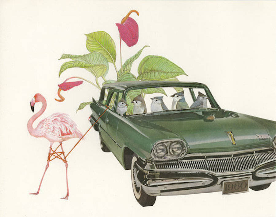 Birds Plants and Vintage Cars Collages (10 pics)
