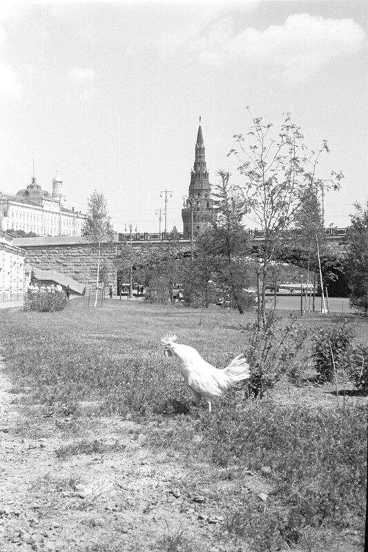 Петух и Кремль