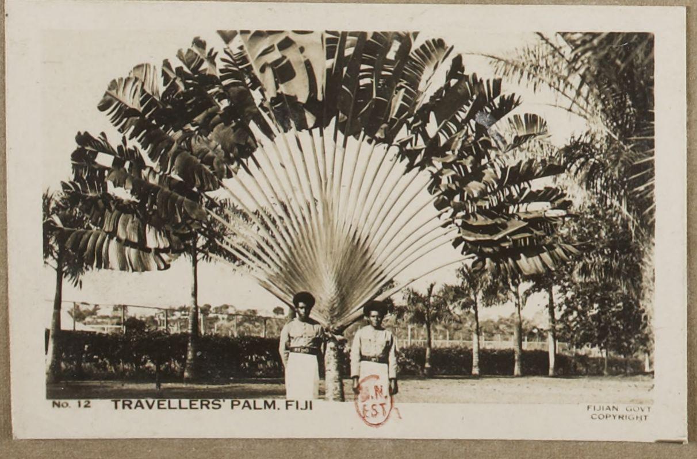 Отель Travellers Palm