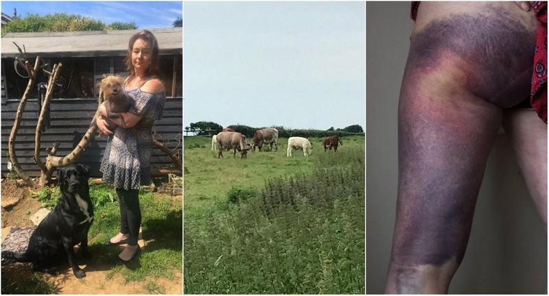 Вероломное нападение коровы