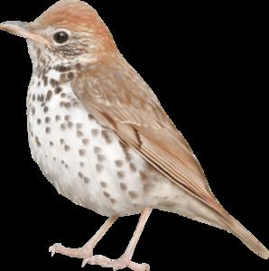 птички коричневые