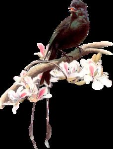 птицы черные
