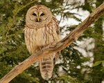 owl_bird_branches_wood_feathers_predator_85978_1280x1024.jpg