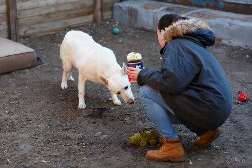Бланко Нуар собака из приюта догпорта