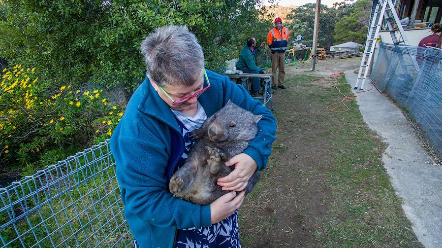 3. Так в лесном доме Биссетов поселился кенгуренок. Постепенно они его выходили, она подрос и п