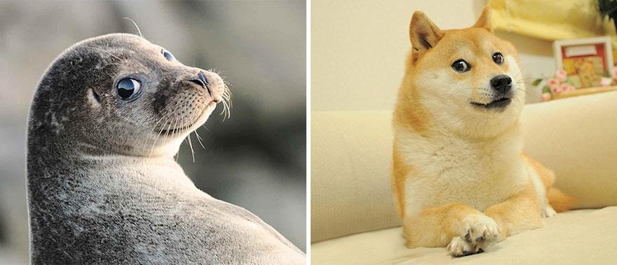 Мы тут обнаружили, что морские котики на самом деле… морские собачки! (19 фото)