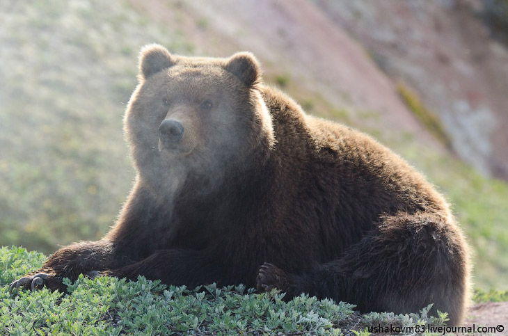 2. Например? в заповеднике «Брянский лес», общей площадью всего 12 186.00 га, по сравнению с Кроноцк