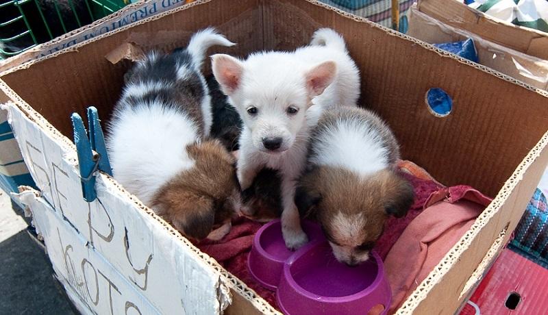 Никто не собирается их кормить или поить, их даже вряд ли выпустят из коробок. Днем они будут работа