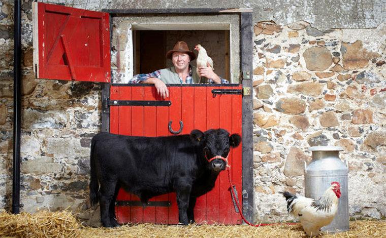 Арчи ждала типичная бычья судьба: ему предстояло посетить лучшие рестораны мира под видом стейков. Н